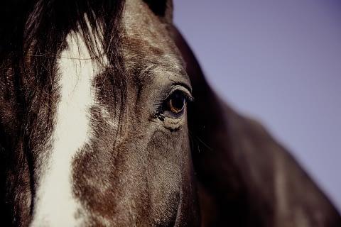 Horse as spirit animal